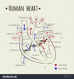 1500x1600 heart diagram drawing [ 1500 x 1600 Pixel ]