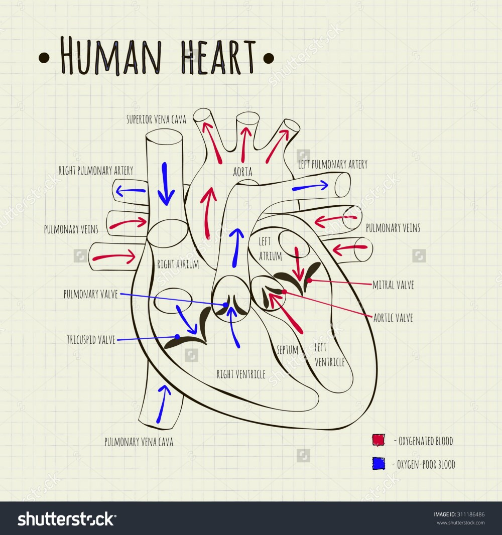 medium resolution of 1500x1600 heart diagram drawing