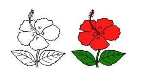hibiscus flower drawing easy drawings simple chinese rose raya bunga step draw flowers lukisan getdrawings clipart clipartmag vine