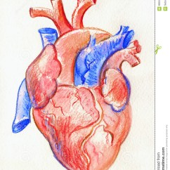 Anatomical Heart Diagram Honeywell Rth8580wf Wiring Human Pencil Drawing At Getdrawings Com Free For Personal 999x1300 Sketch With Label Hand