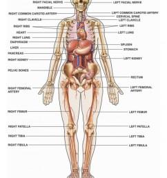 768x1024 diagram human body organs labeled [ 768 x 1024 Pixel ]