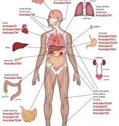 812x1024 labelled diagram of the human body diagram human body organs [ 812 x 1024 Pixel ]
