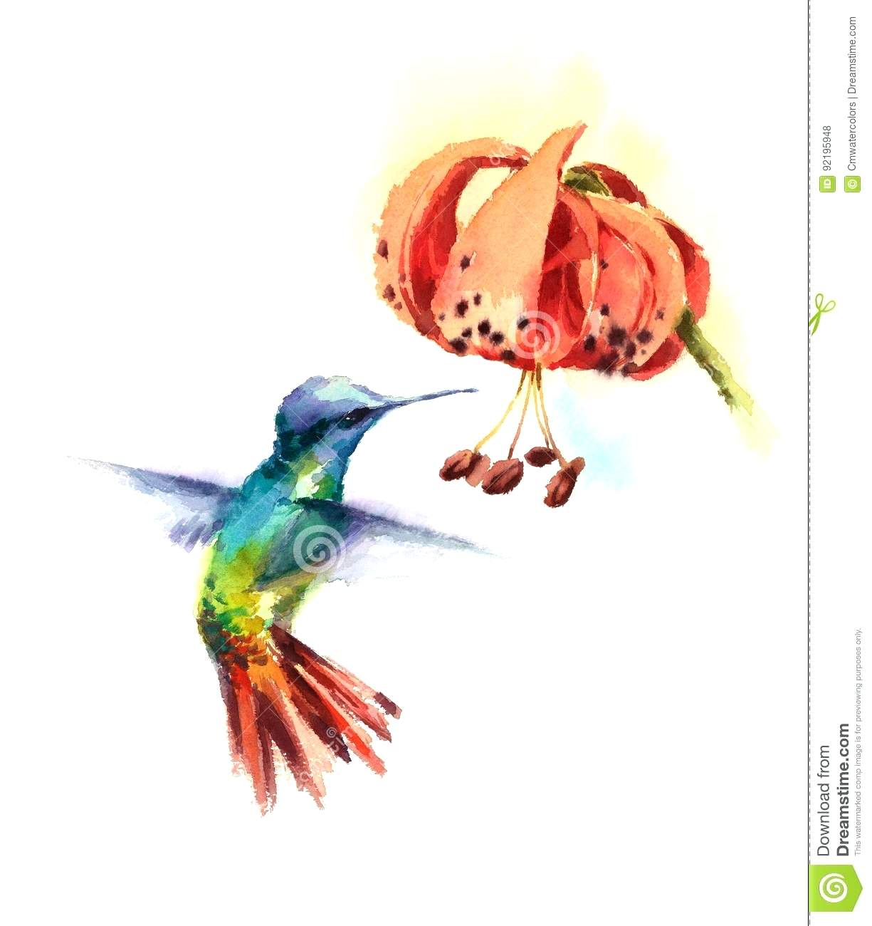 hummingbird diagram of color stress strain for mild steel hummingbirds and flowers drawing at getdrawings free