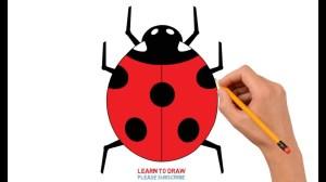 ladybug easy step drawing draw drawings getdrawings clipartmag paintingvalley