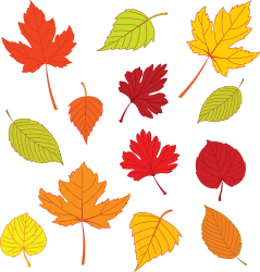leaves leaf template autumn templates drawing fall clipart printable leave coloured maple printables google drawings clip pattern tree print coloring