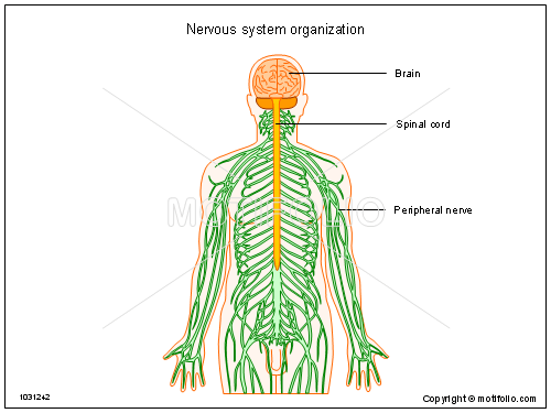 earthworm diagram worksheet ford 8n wiring side mount nervous system drawing at getdrawings.com | free for personal use of your ...