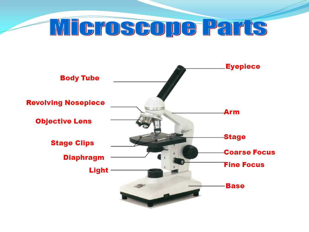 Parts Of A Microscope Drawing At Getdrawings