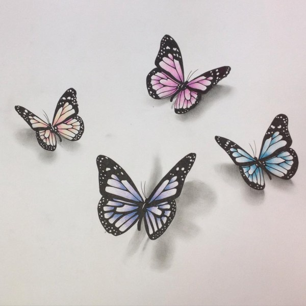 Pencil Drawing Of Butterfly Free