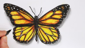 butterfly realistic drawing draw pencil lapse things butterflies drawings easy sketch monarch simple 3d colorful painting getdrawings