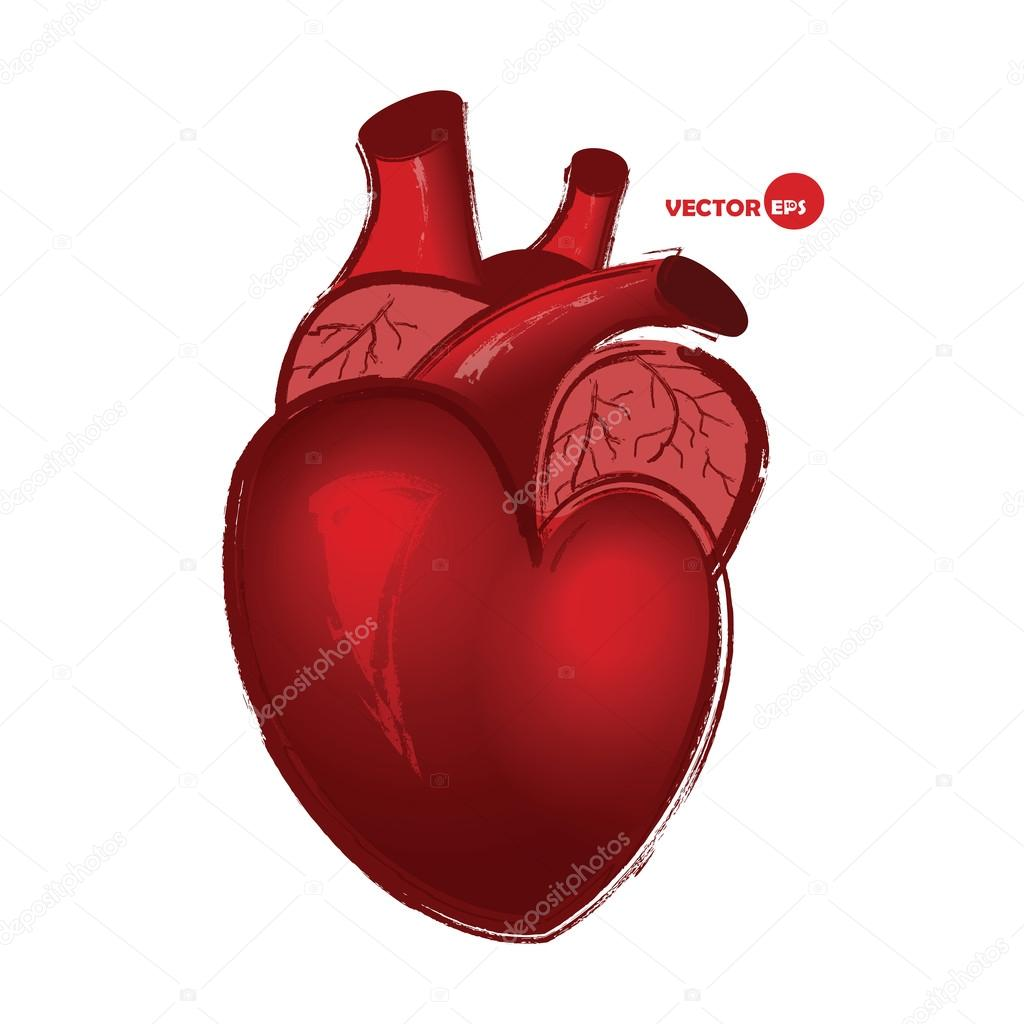 realistic heart diagram wiring boat trailer lights real human drawing at getdrawings free for