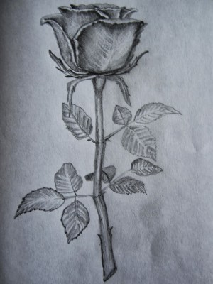 pencil rose drawing sketch drawings sketches flower easy outline roses shading shaded simple getdrawings cool pencils unleashed sketching paintingvalley