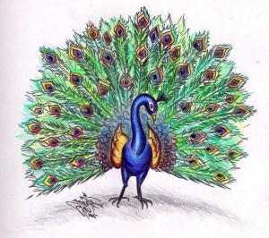 peacock sketch drawing simple colorful colour getdrawings sketches dancing paintingvalley paintings sket