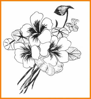 flower drawing flowers simple cool designs vase easy draw pattern drawings sketch paper getdrawings