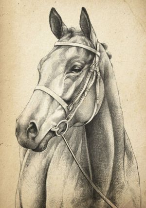 horse head drawing drawings realistic drawn face pencil simple sketch animal draw horses watercolor sketches easy paintings equine explore getdrawings