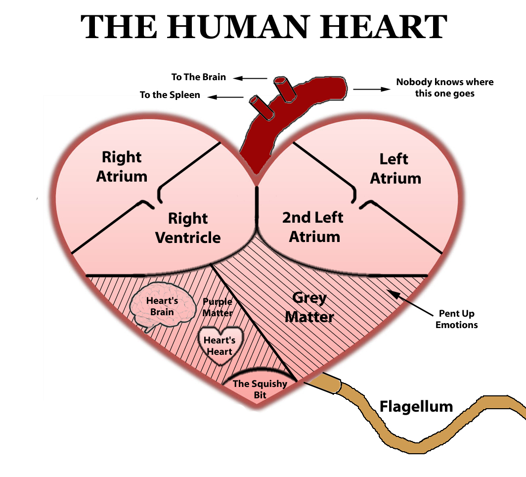 Simple Human Heart Drawing At Getdrawings