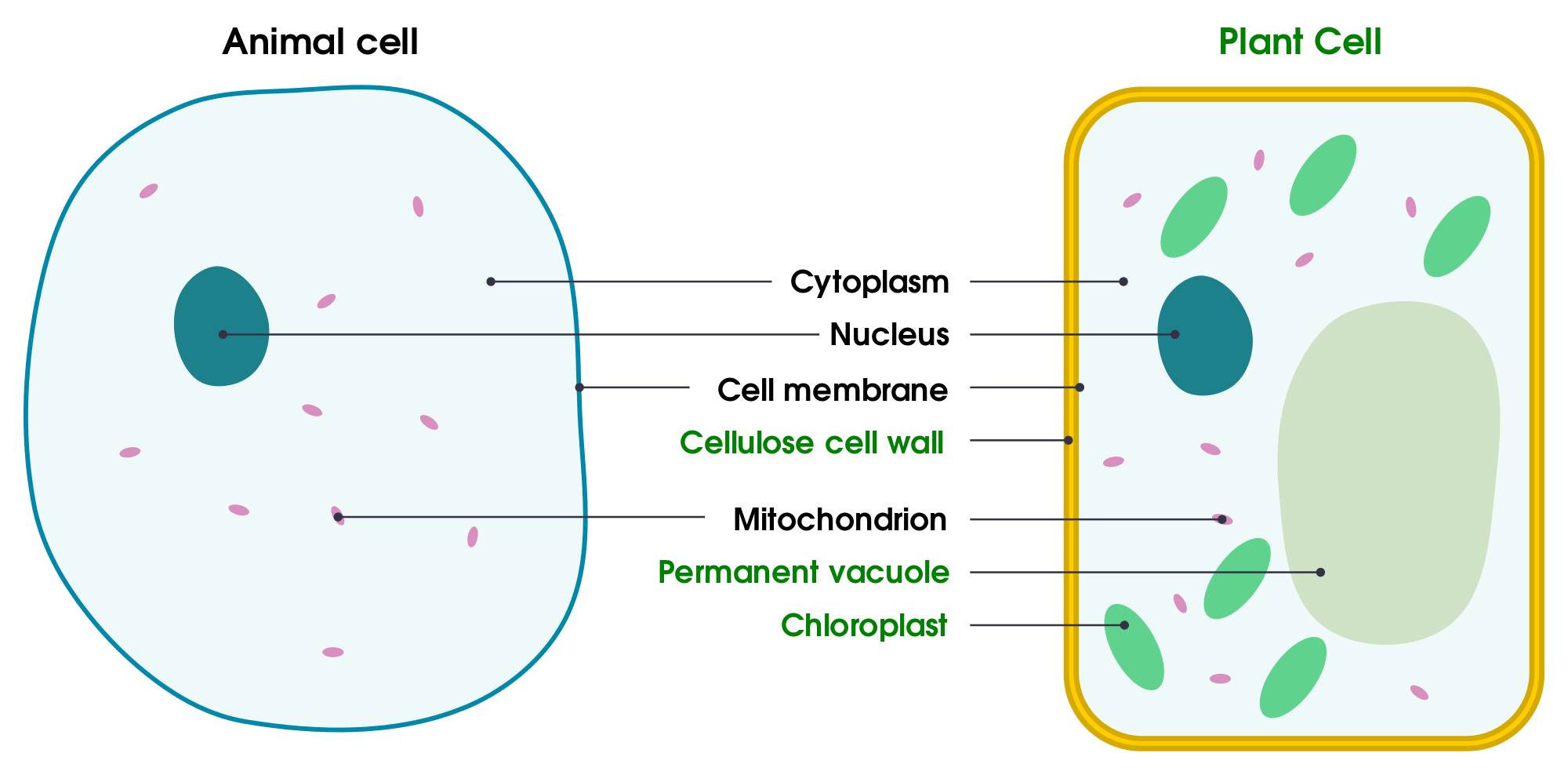 animal cell diagram labeled and functions venn syllogism simple plant drawing at getdrawings com free for personal use 2000x988 filesimple of yeast en svg