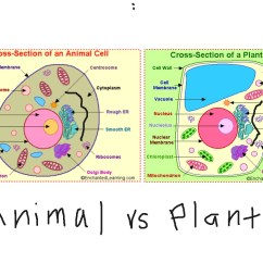 Plant Cell Diagram Animal Simple Drawing Cavalier Wiring At Getdrawings Free For