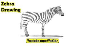 zebra drawing simple draw getdrawings