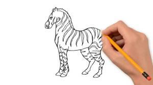 zebra step drawing draw getdrawings simple pencil animals