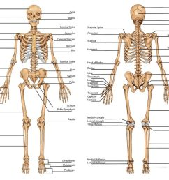 1024x845 diagram of human upper body awesome skeletal system labeled [ 1024 x 845 Pixel ]
