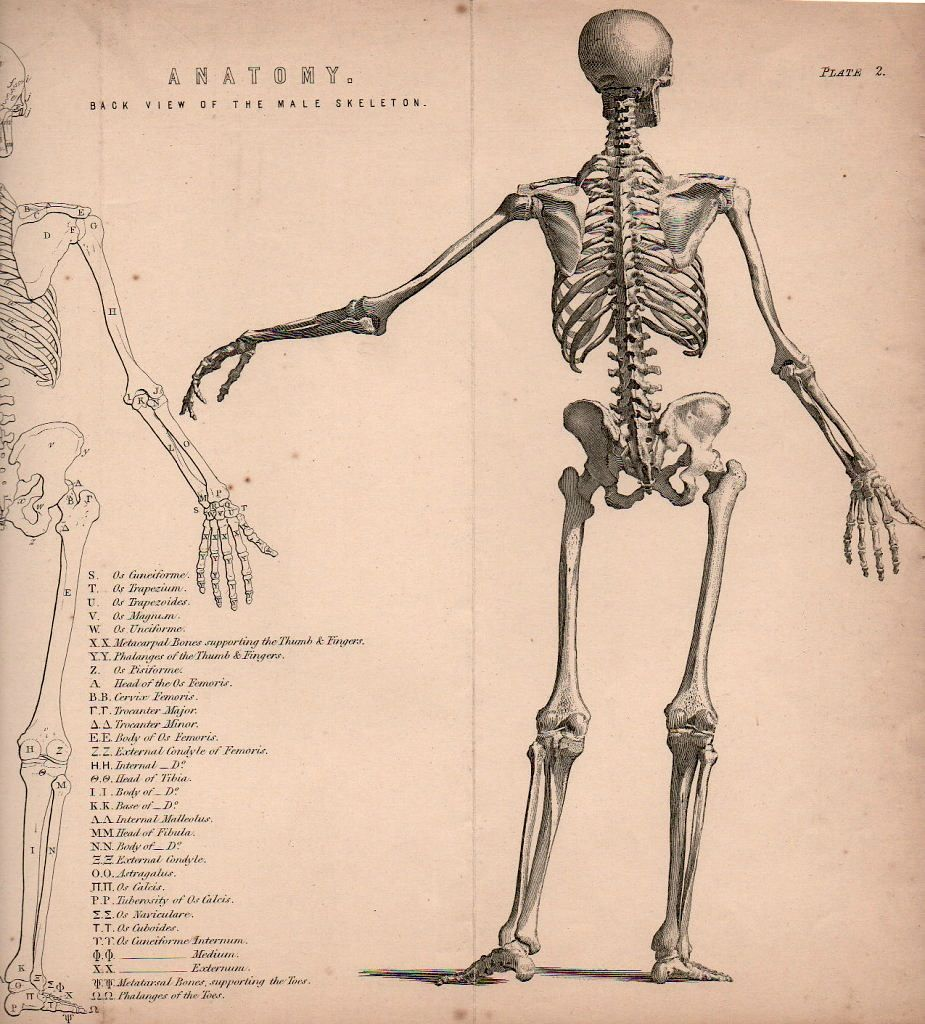 medium resolution of 925x1024 download drawing skeleton bones and skulls