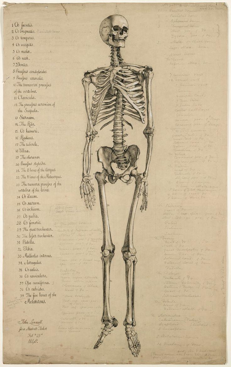 medium resolution of 804x1254 skeleton antique book plate 736x1171 skull full body drawings 81 best anatomy for artists skeletons
