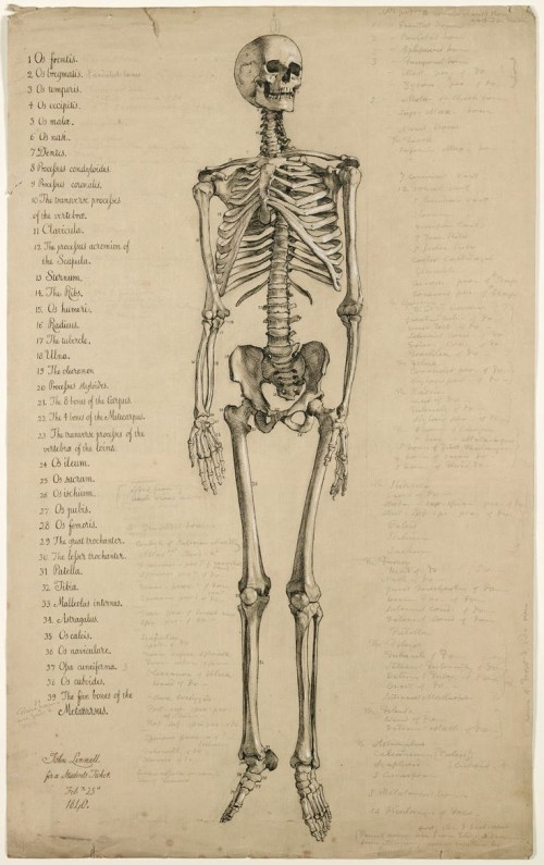 small resolution of 804x1254 skeleton antique book plate 736x1171 skull full body drawings 81 best anatomy for artists skeletons