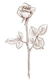 rose drawing outline tattoo flower stencil single getdrawings