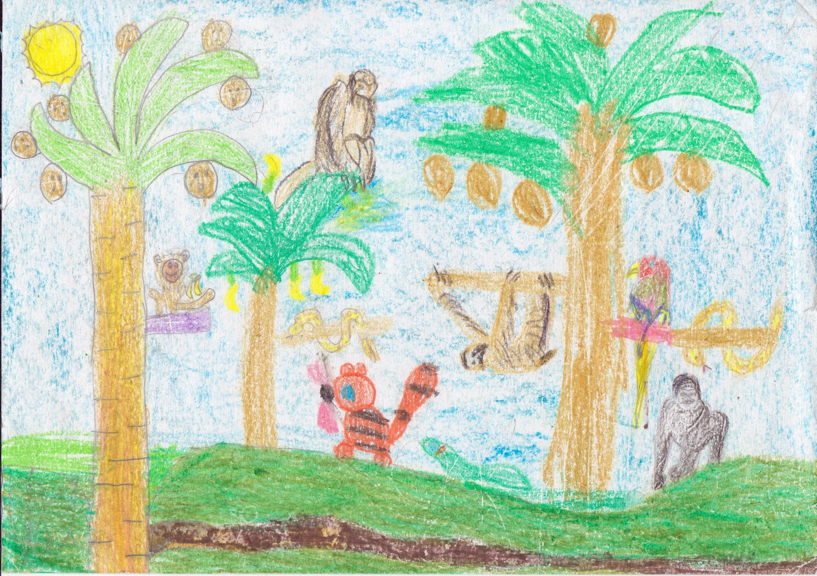 Tropical Rainforest Drawing At Getdrawings