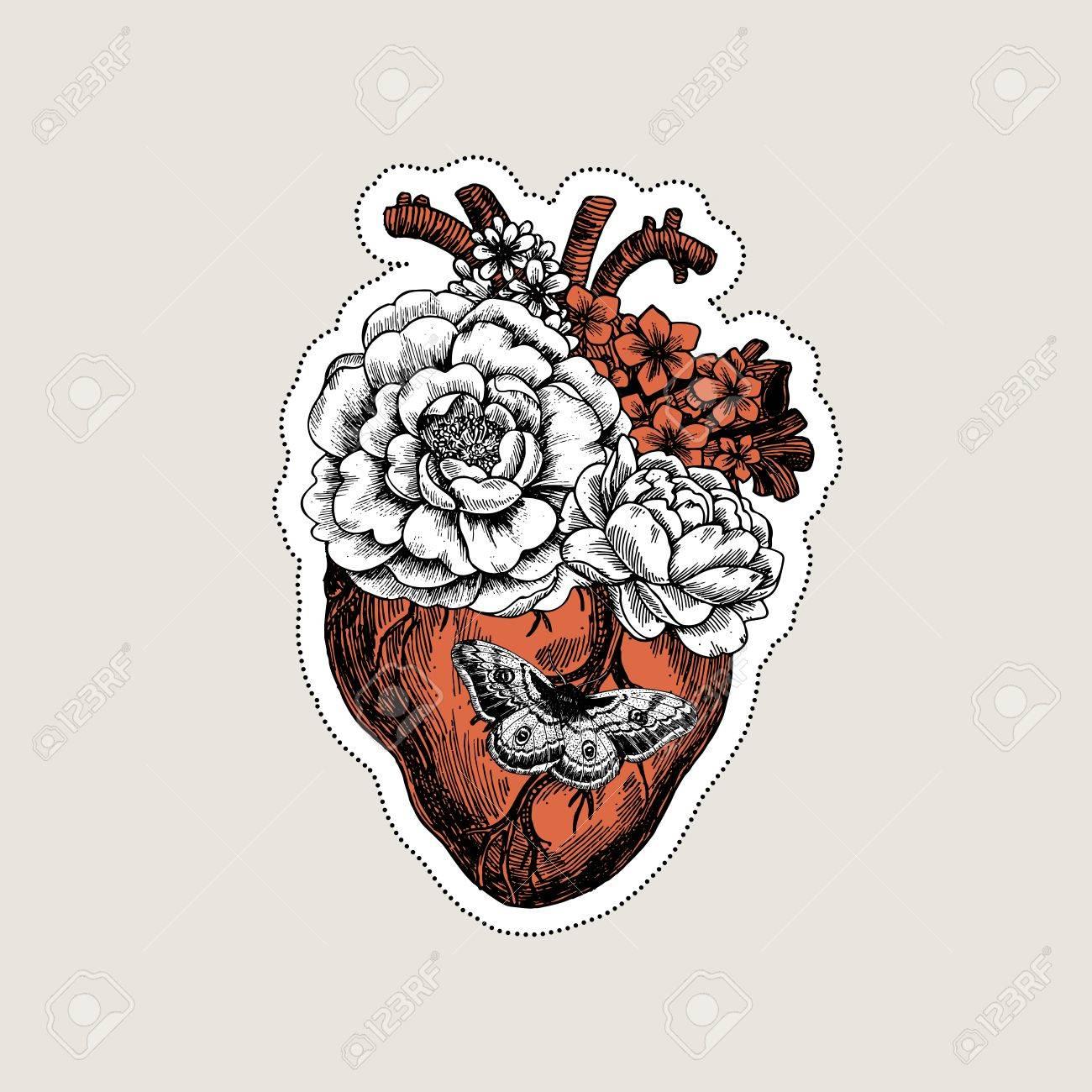 vintage red real heart diagram 2000 civic si fuse box anatomical drawing at getdrawings free