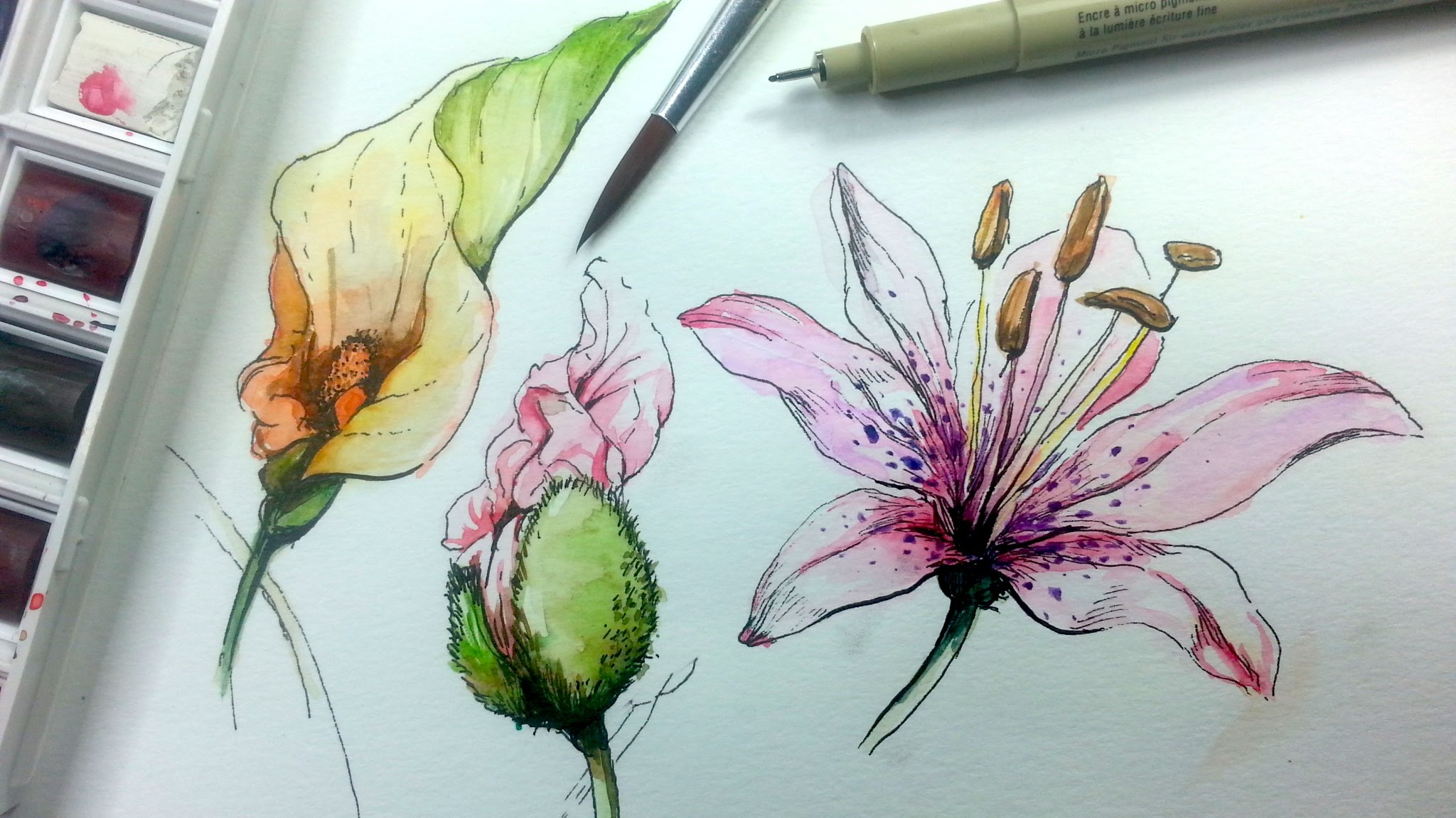 Water Color Drawing At Getdrawings