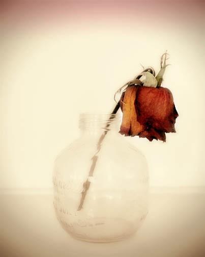 Losing Rose Tumblr Petals