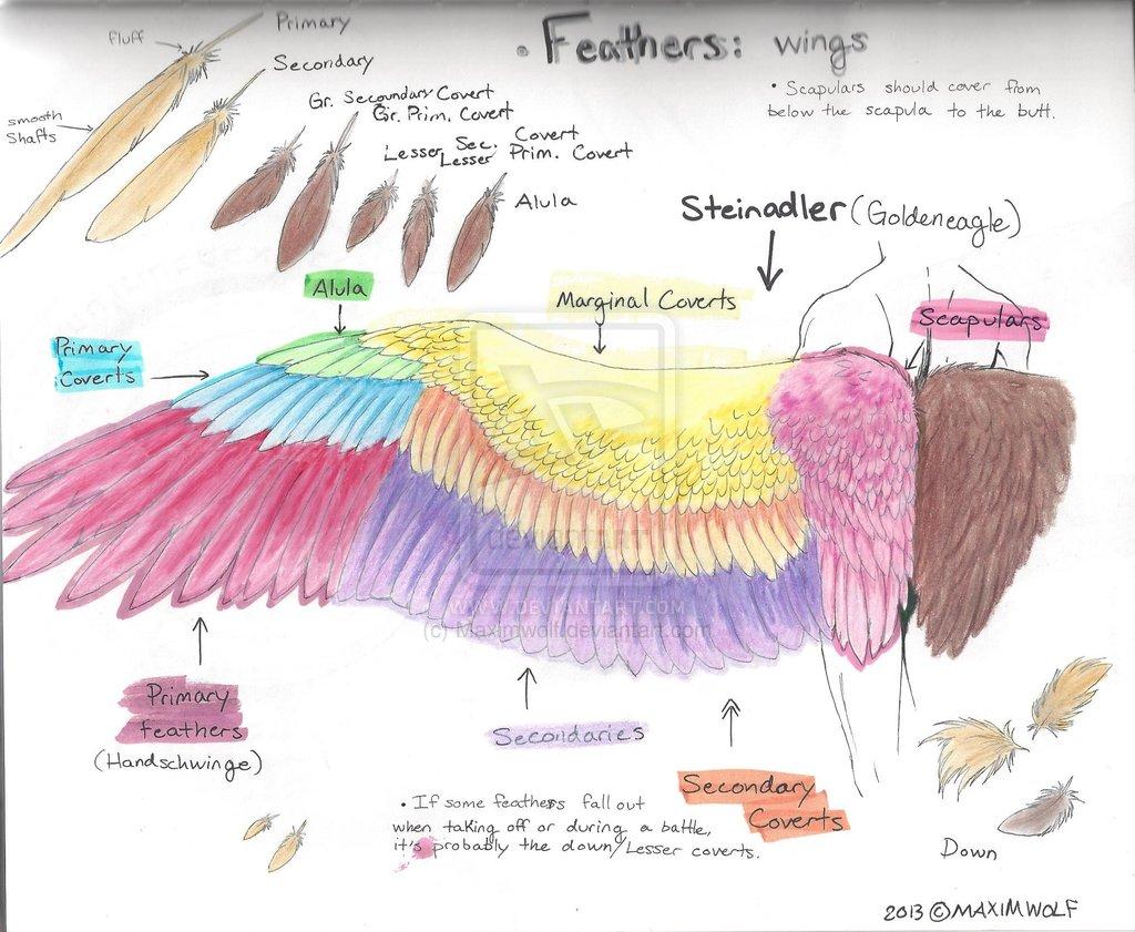 Wings Drawing Tutorial At Getdrawings