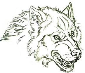 wolf drawing face angry head drawings sketch side tattoo mad werewolf sketches coloring tattoos werewolves pages eye getdrawings animal illustration