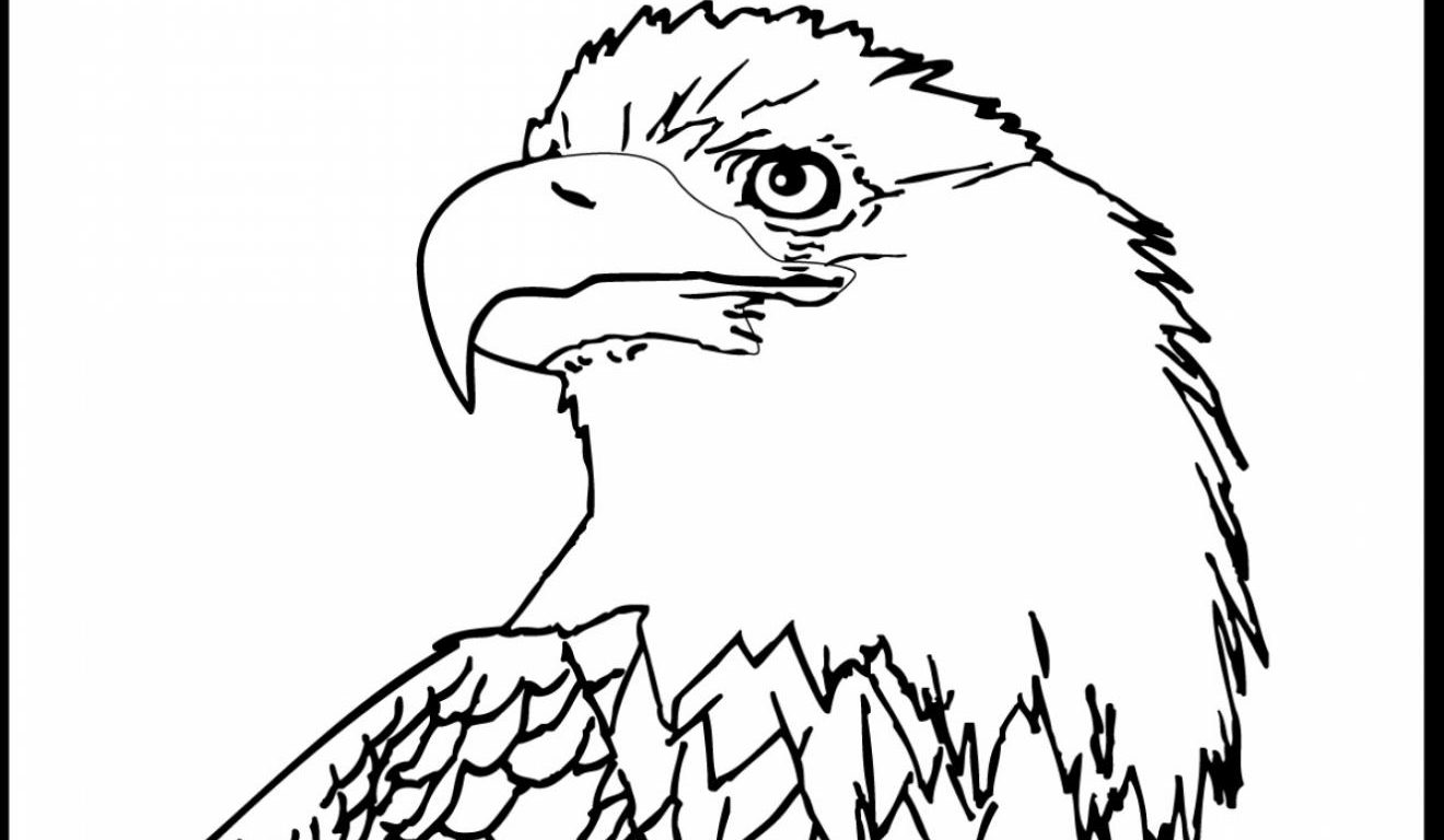 American Eagle Drawing At Getdrawings