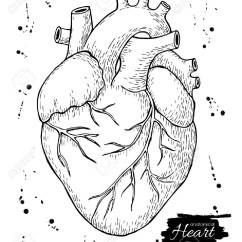 Vintage Red Real Heart Diagram Goodman Electric Air Handler Wiring Anatomical Drawing At Getdrawings Free For