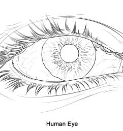 1199x899 human eye super coloring 2017 18 art 1 human eye [ 1199 x 899 Pixel ]