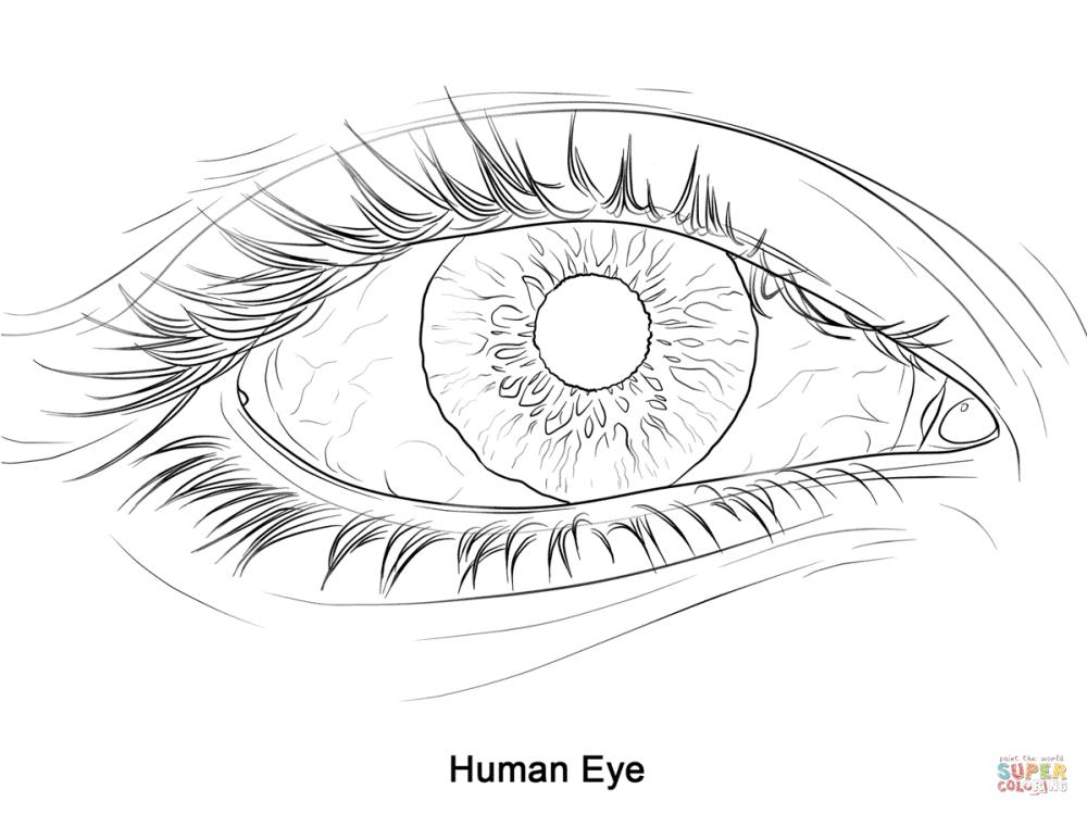 medium resolution of 1199x899 human eye super coloring 2017 18 art 1 human eye