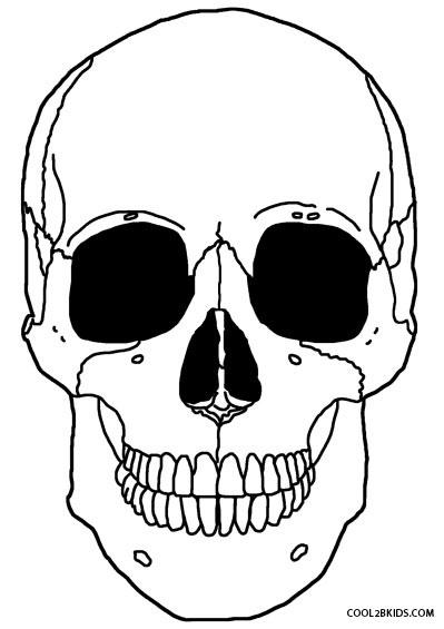 Anatomy Skeleton Drawing At Getdrawings