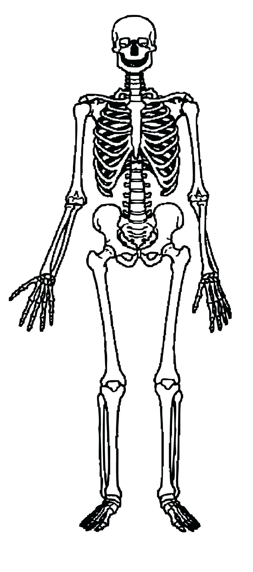 hight resolution of 884x1995 diagram human skeleton diagram labeled for kids