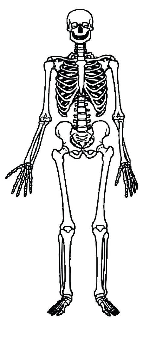 small resolution of 884x1995 diagram human skeleton diagram labeled for kids