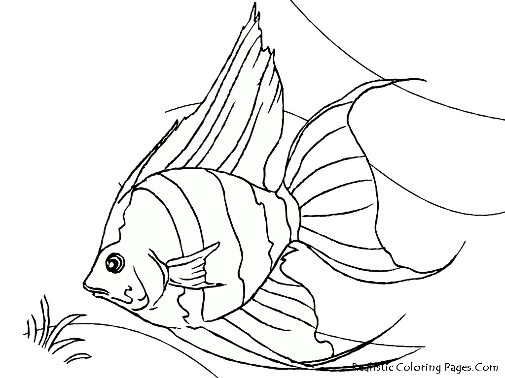 Angel Fish Drawing At Getdrawings