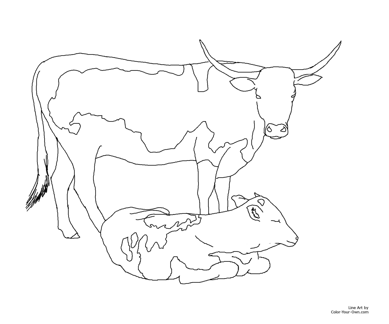 Angus Cow Drawing At Getdrawings