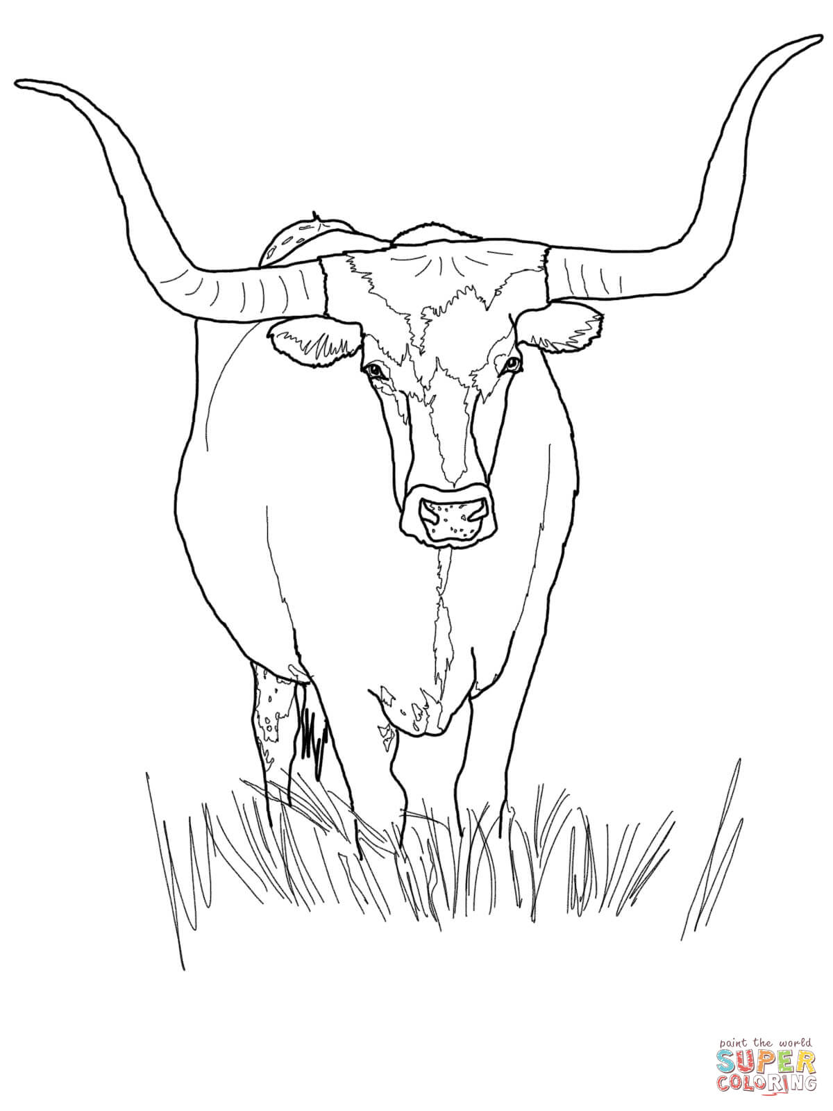 Angus Cow Drawing At Getdrawings