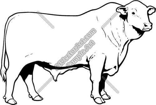 Angus Cow Drawing At Free For Personal