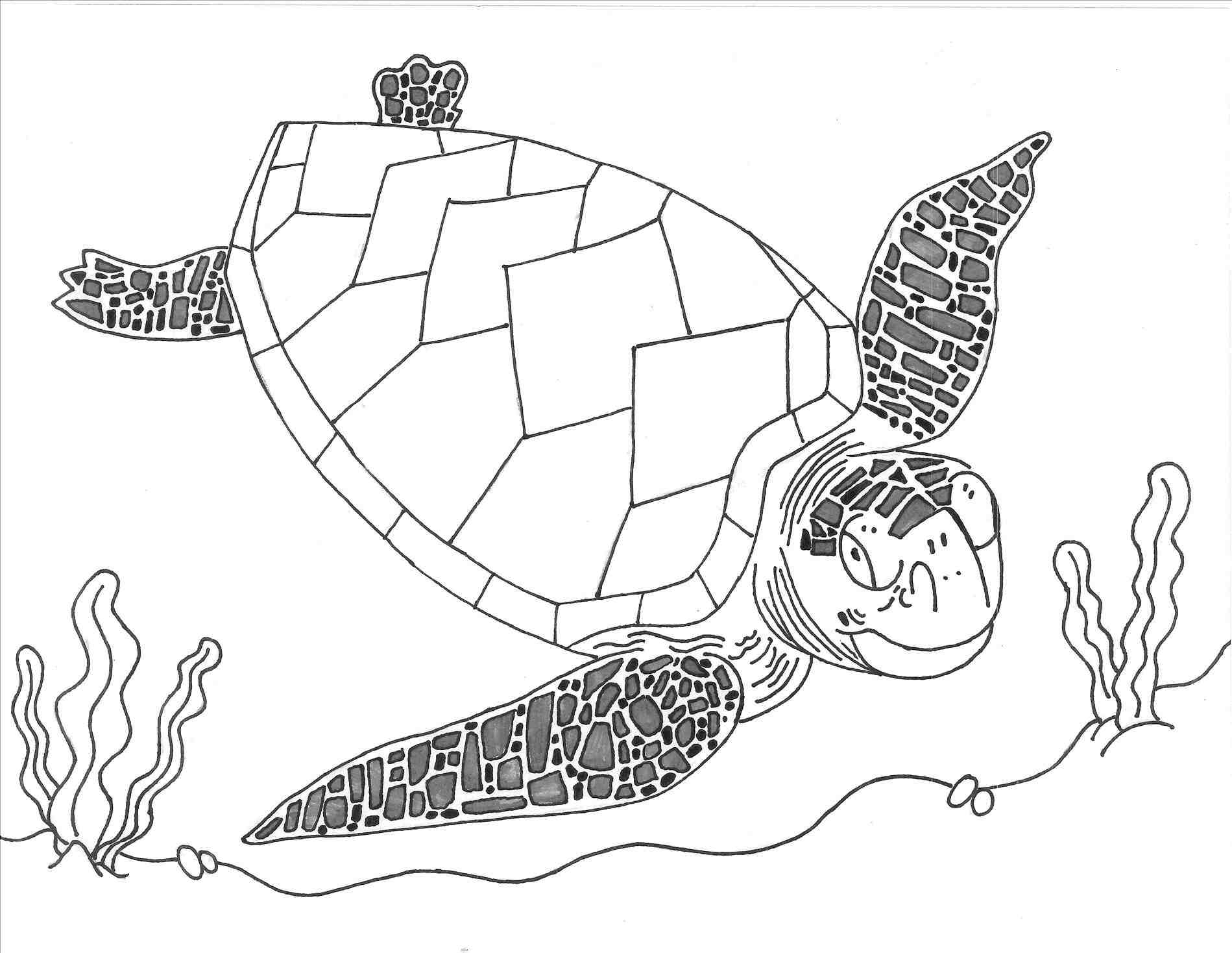 Baby Sea Turtle Drawing At Getdrawings