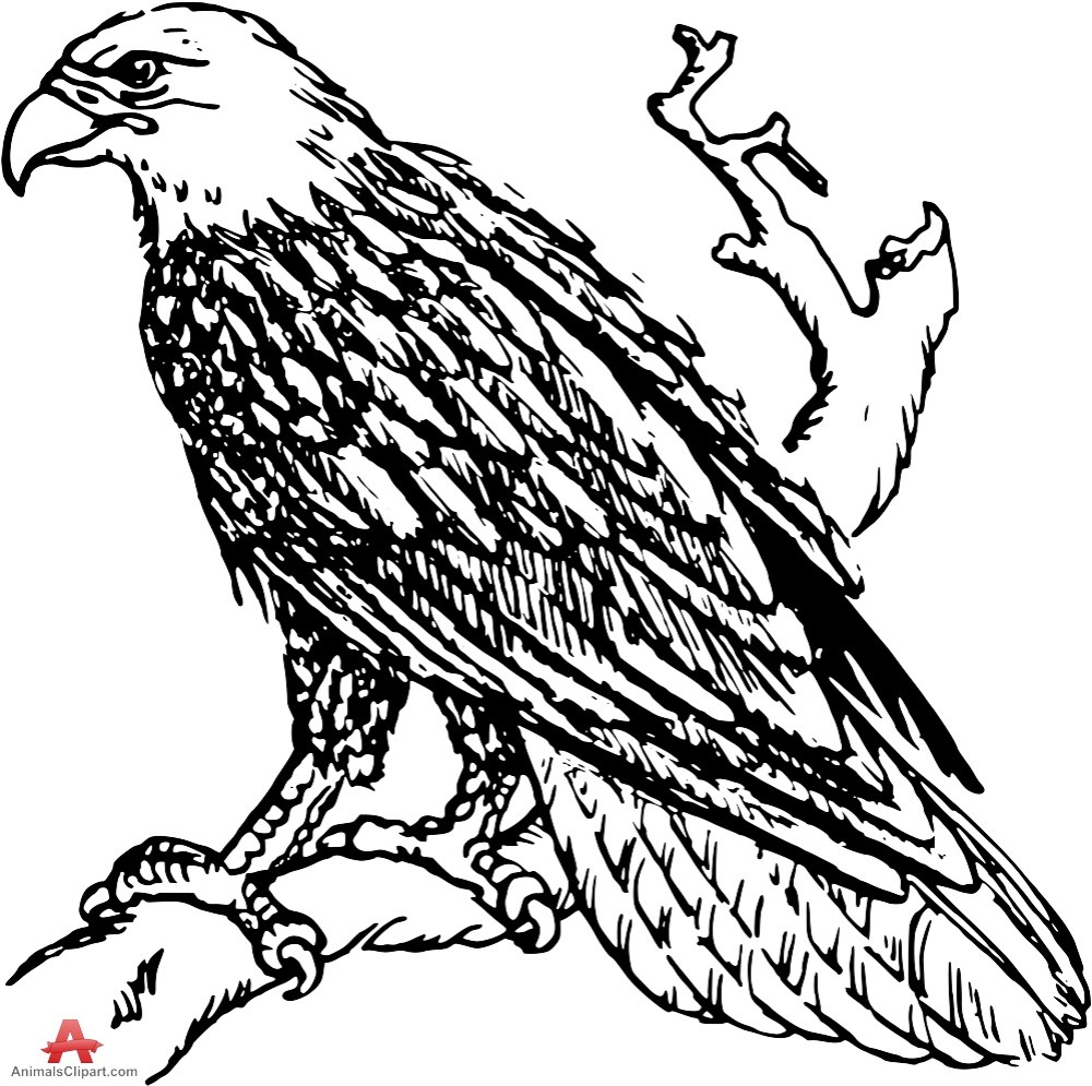 medium resolution of 999x995 drawing clipart eagle
