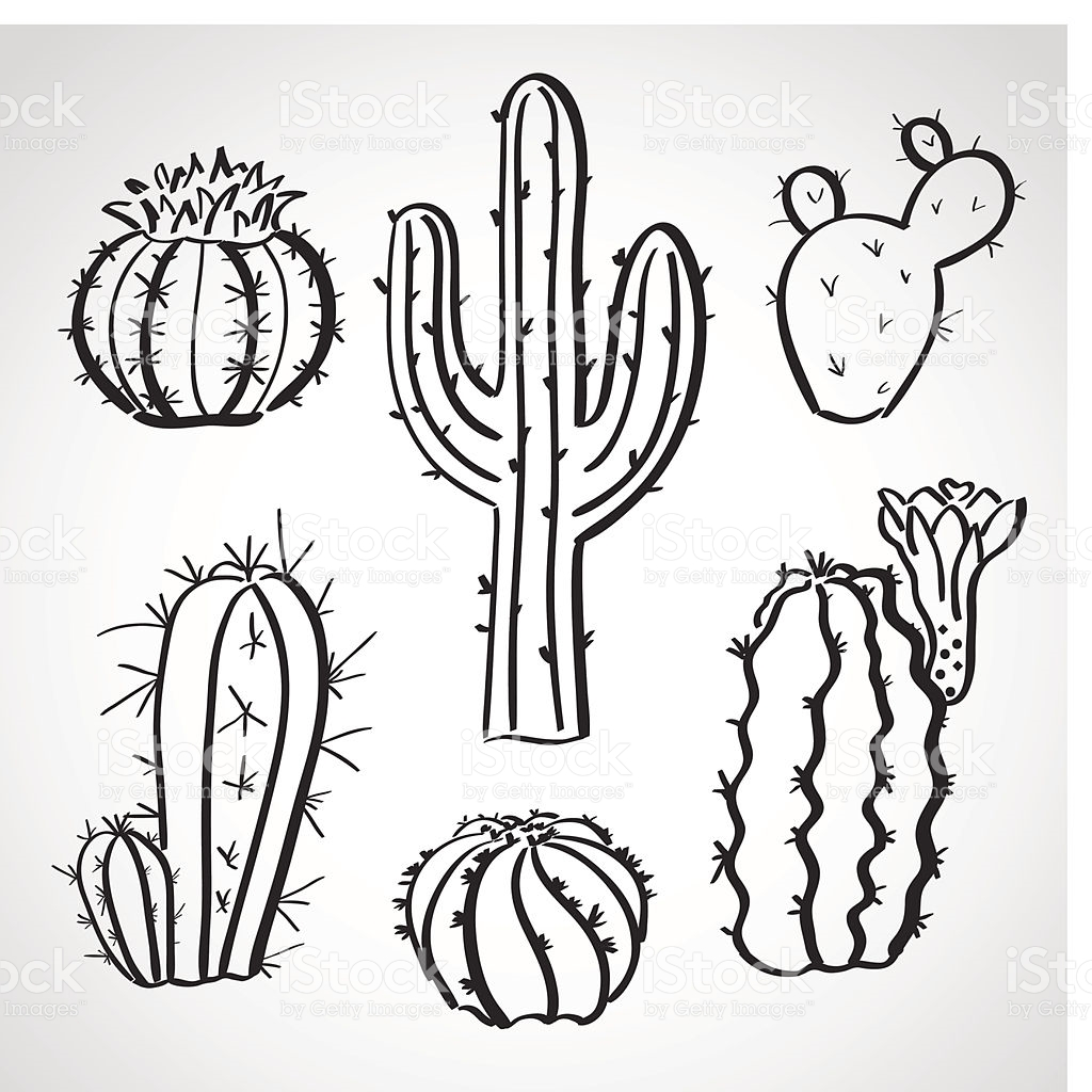 Barrel Cactus Drawing At Getdrawings