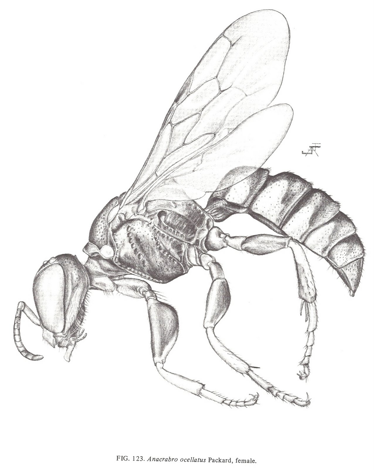Bee Scientific Drawing At Getdrawings