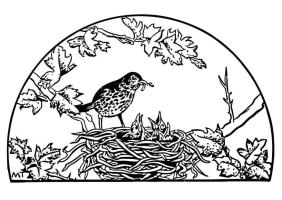 Bird In Nest Drawing at GetDrawings   Free download